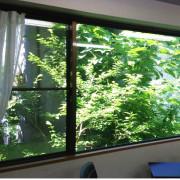 窓越しの緑に癒される